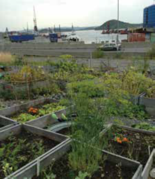 With 10 year waiting lists for allotments in Oslo, Norway's successful food growing movement MAJOBO has secured a temporary site with 150 plots (thousands of applications received)